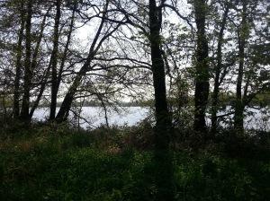Rondje Hilversum Loenderveense plas